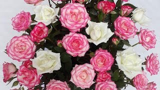 Cách cắm hoa#Cắm hoa trái tim hồng#trái tim lộn ngược trông rất hầm hố