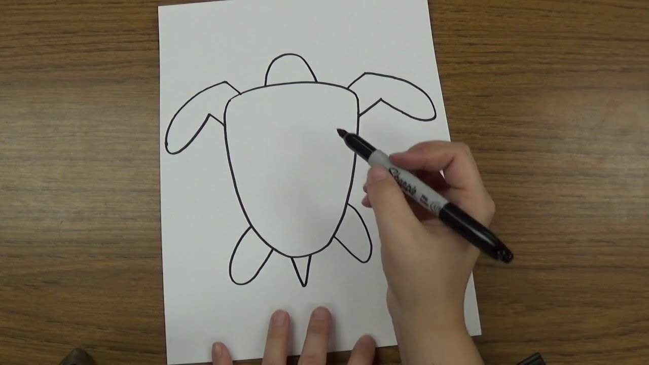 Uncategorized Drawing Of Sea Turtle how to draw a sea turtle youtube