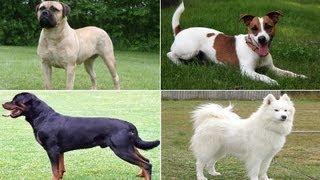 Repeat youtube video Harika Köpek Cinsleri ve Sesleri