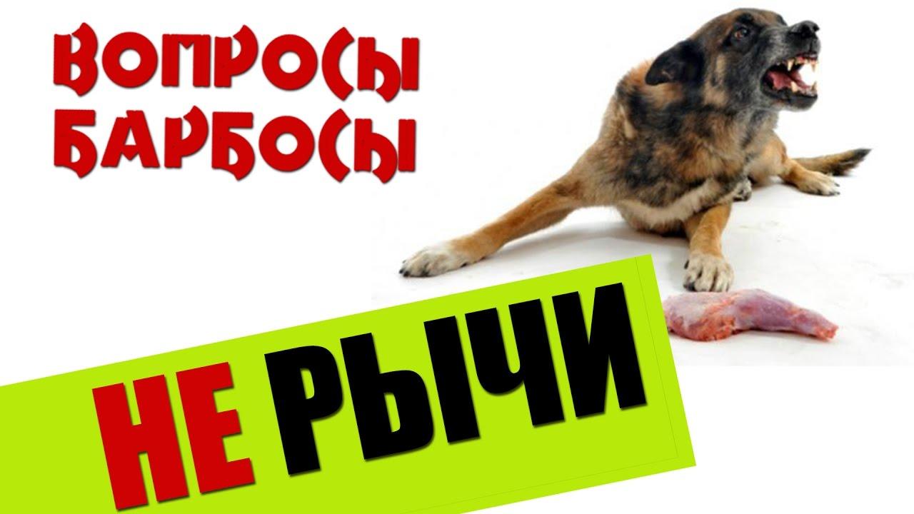 Как отучить собаку рычать на хозяина, когда она ест.