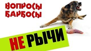 видео Агрессия собаки к членам семьи. Воспитание и дрессировка.