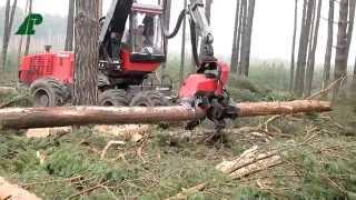 Nadleśnictwo Babimost - Wycinka drzew