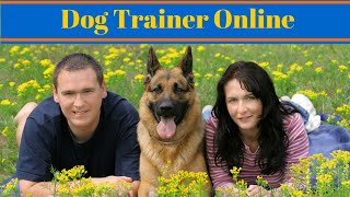 Become A Dog Trainer Online - Dog Training Careers
