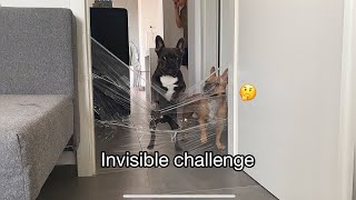 Frenchies Reaction To The Invisible Challenge