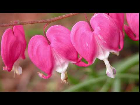 Famous Love Poems with music by Werner Elmker [HQ]