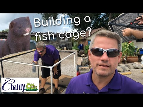 How to stop the Mink from attacking your koi or goldfish pond.