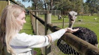 Destination WA - Caversham Wildlife Park   Meet the Quirky Animals
