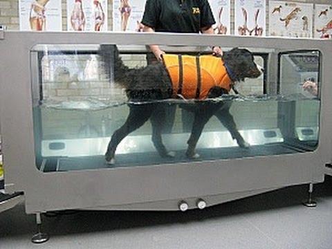 hydrotherapie-chien