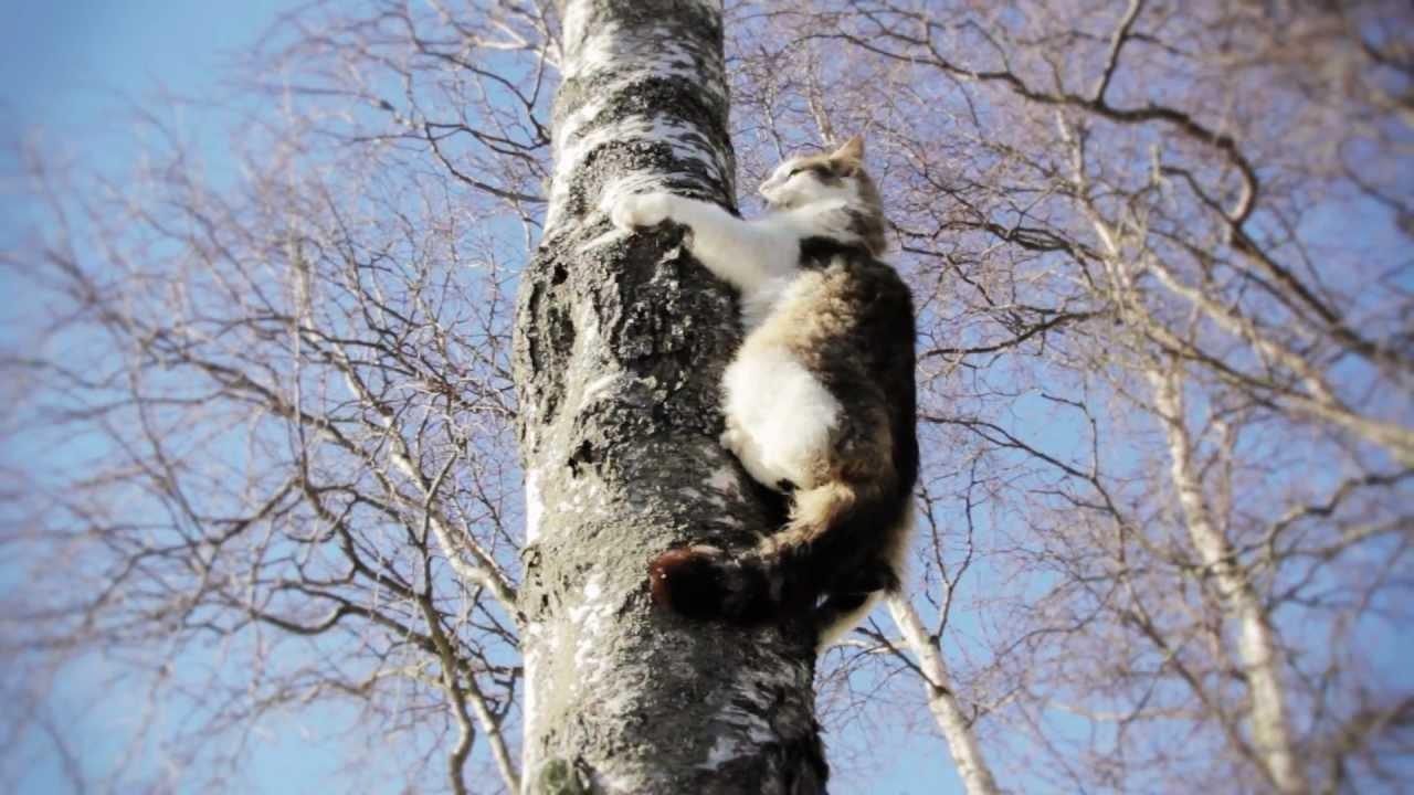 Cat In A Tree Rescue
