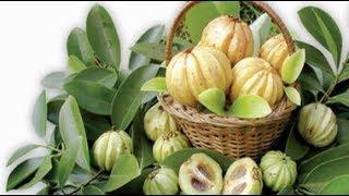 Herbal Weight Loss Supplement - Garcinia Cambogia