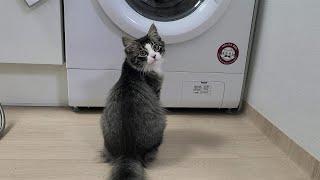 집에서 처음으로 빨래를 했더니 고양이가 하루종일 세탁기…