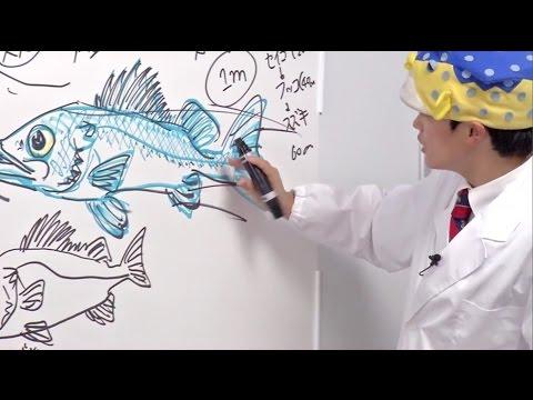 さかなクンのお魚図鑑2スズキ編 Youtube
