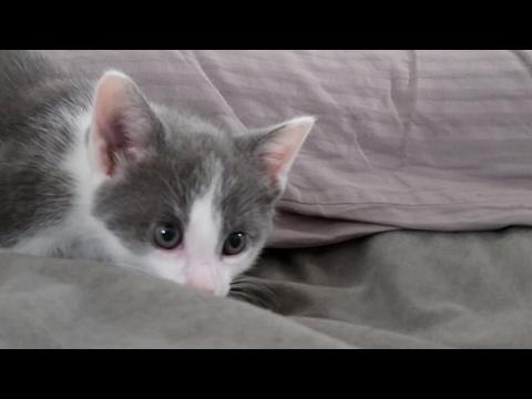 Kitten Close Up 2017-05-28