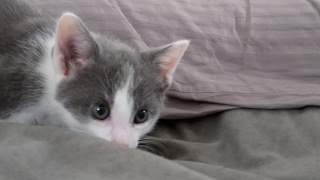 Kitten Close Up 2017-05-28