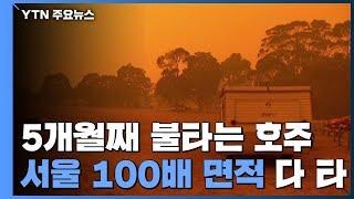 5개월째 불타는 호주...서울 100배 면적 잿더미 / YTN