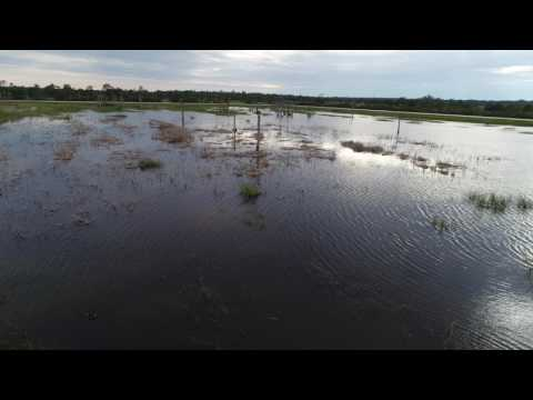 Viera Florida Wet Lands