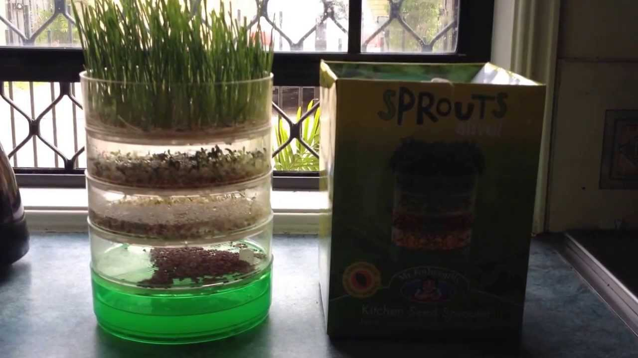 Kitchen Garden Sprouter Indoor Garden Kitchen Seed Sprouter Product Review Youtube