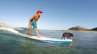 GoPro: Baby Pig Goes Surfing in Hawaii
