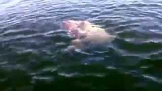"""Most Boston reaction ever to this """"Sea Monstah"""""""