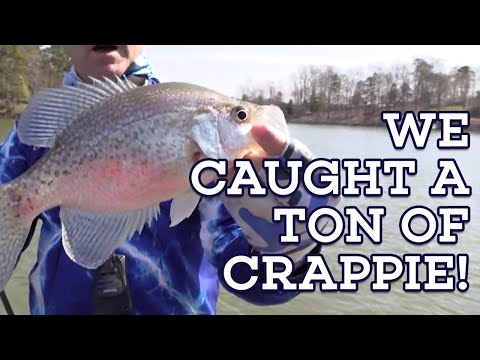 CRAPPIE LONGLINING HOW TO! Let's Fish #4 SouthEAST Lake Wylie, North/South Carolina Crappie Fishing