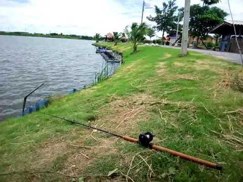 ตั้งกล้องถ่ายเย่อกับปลาของมือใหม่