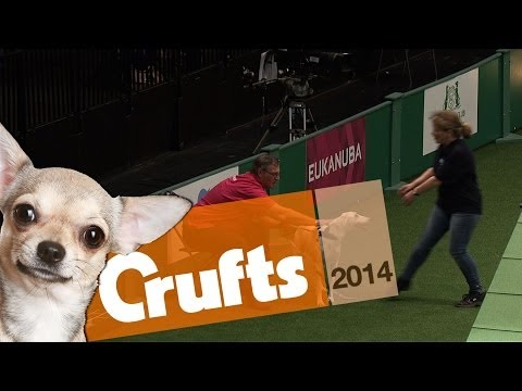 FAIL | Rescue Dog Runs Away! | Crufts 2014