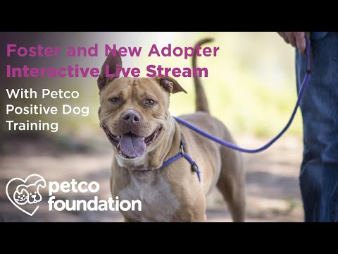 Be A Foster Petco Foundation