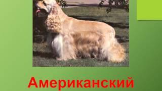 Презентация для детей по Доману. Собаки 2 (породы)