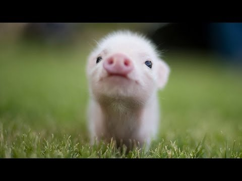 Top 15 Cutest Baby Animals