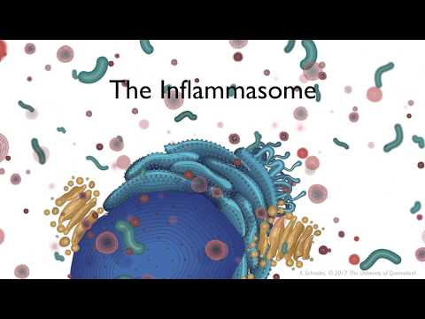 The Inflammasome signalling pathway