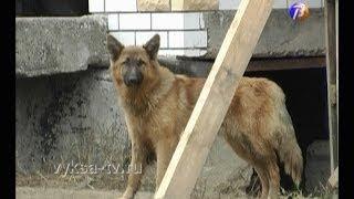 Поможем бездомным животным вместе!