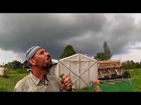 Тыква и кабачки - первые результаты //Из города в деревню