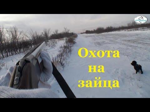 Астана Охота на зайца