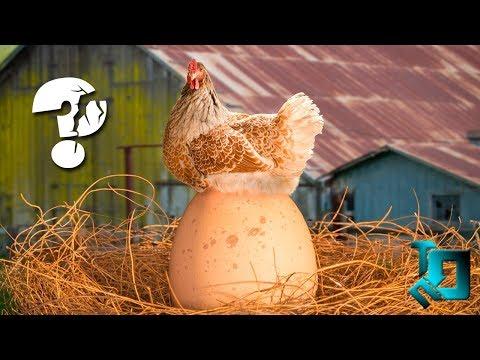 Вопрос: Кто появился раньше курица или яйцо?