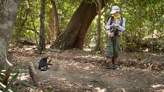 Tracking Capuchin monkeys in Costa Rica: A 25 year study in Lomas Barbudal
