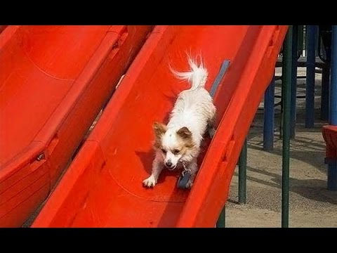Puppies on Slides Compilation (2013)