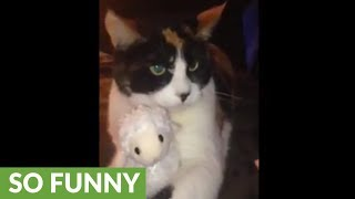 Cat becomes extremely protective of favorite stuffed animal