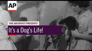 It's A Dog's Life! - 1958 | The Archivist Presents | #103