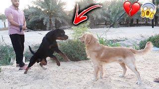 كلبي روكي هجم على صديقه القديم بسبب !!