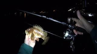rockfish 2021 Сочи 2 мая ерши street fishing Игорь Зинковский