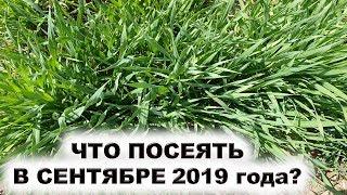 Что посеять в сентябре 2019 года? Можно ли сеять семена редиса, салатов, высаживать лук на зелень?