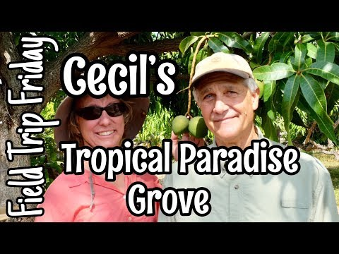 Field Trip Friday- Cecil's Tropical Paradise Grove