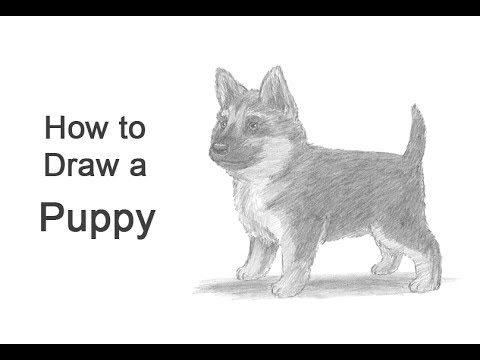 How To Draw A Puppy German Shepherd Youtube
