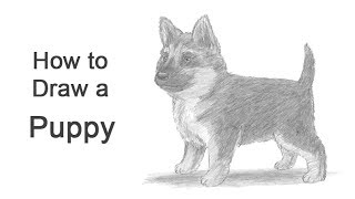 How to Draw a Puppy (German Shepherd)