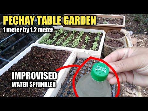 Madaling paraan ng pagtanim ng PECHAY direkta sa araw. Backyard Gardening   Agri-nihan