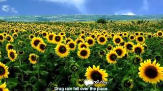 Đồi hoa mặt trời - Yuu ft Ti El ft N3 [Video Lyrics]