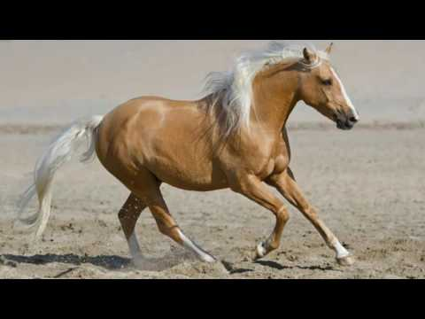 Pretty palomino and flowers horse birthday invite mp3 song download palomino horses mightylinksfo