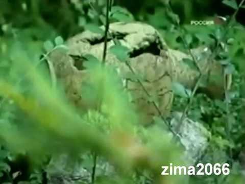 ирина аллегрова и игорь николаев старый знакомый караоке
