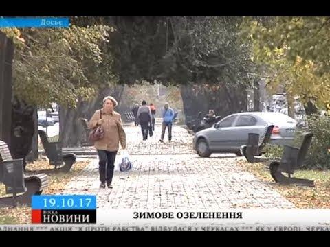 ТРК ВіККА: Черкаську вулицю озеленять у грудні на понад 150 тисяч гривень