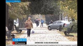 Черкаську вулицю озеленять у грудні на понад 150 тисяч гривень